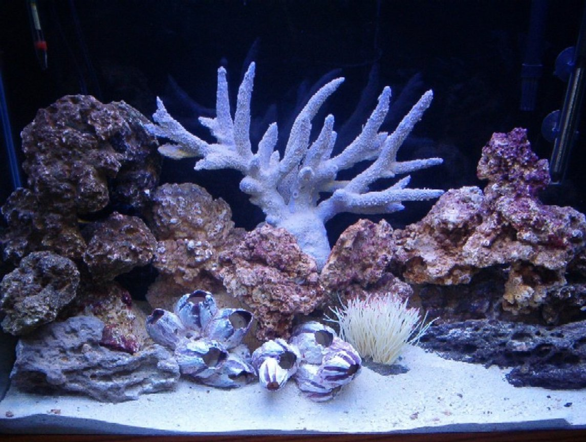 33 gallons reef tank (mostly live coral and fish) - This is day 5