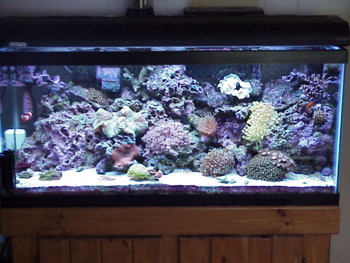 30 gallons reef tank (mostly live coral and fish) - 30 gal mini reef