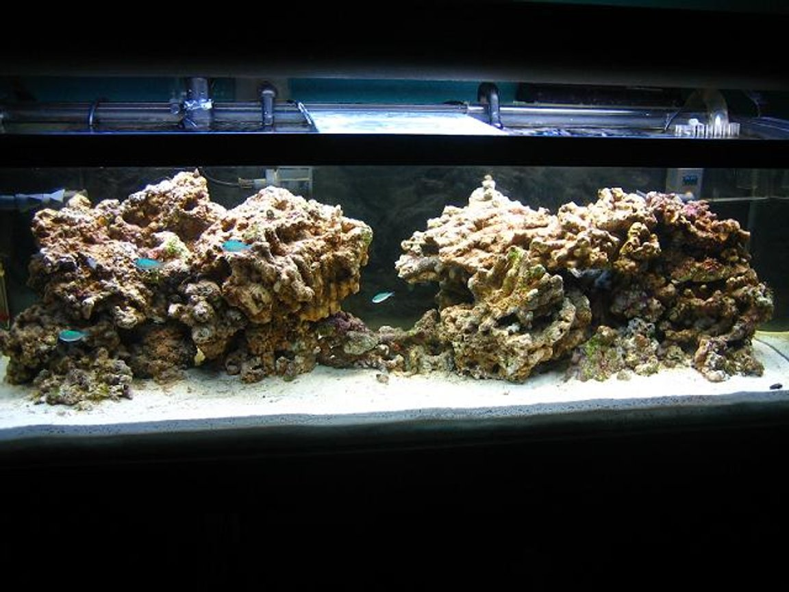 50 gallons reef tank (mostly live coral and fish) - 60 gallon setup