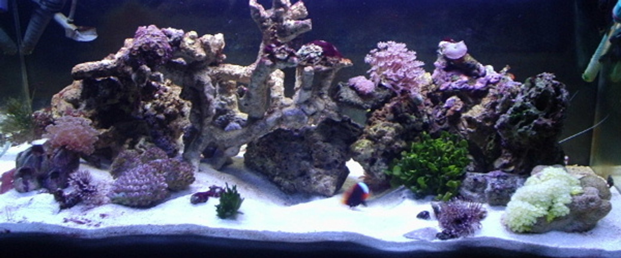 reef tank (mostly live coral and fish) - 40 gallon