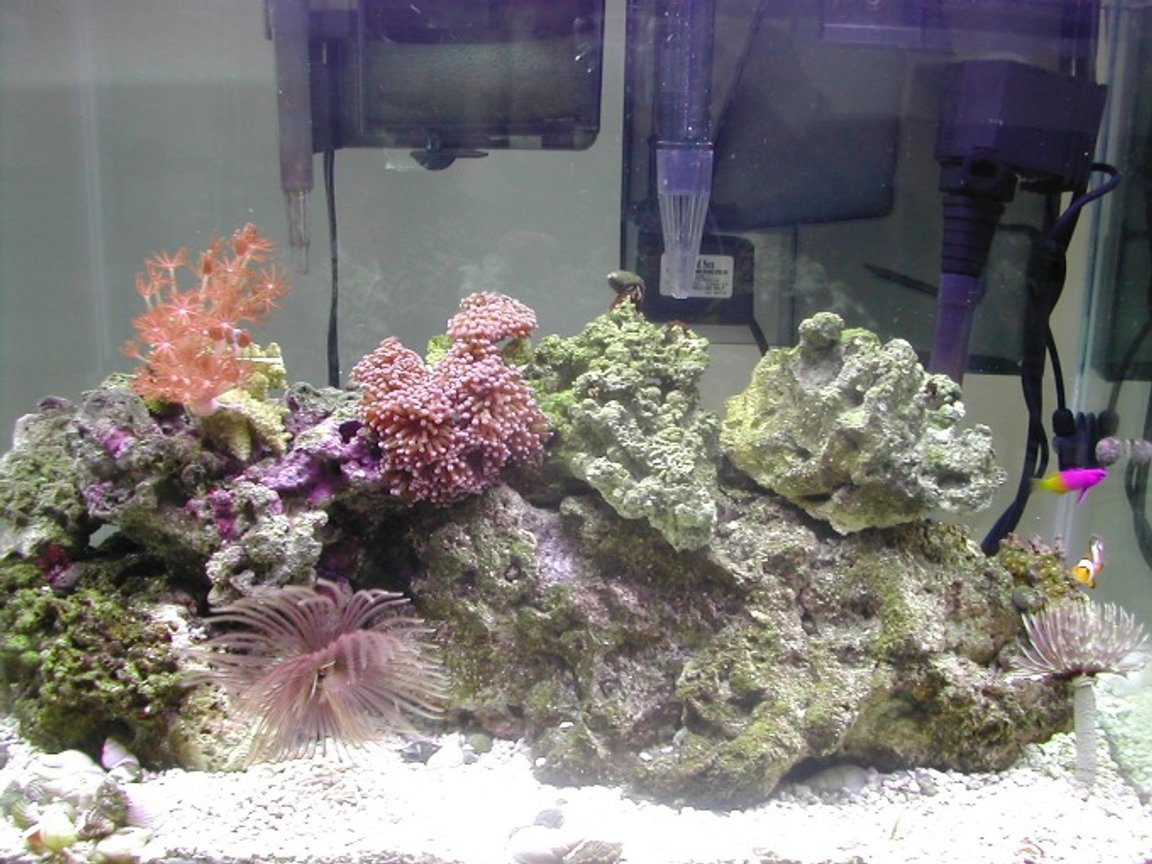 20 gallons reef tank (mostly live coral and fish) - Just Starting