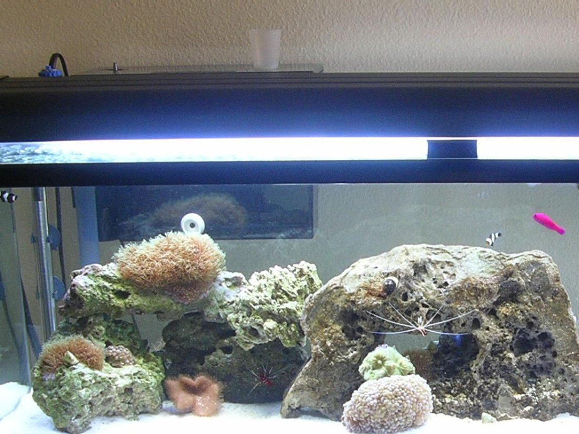 60 gallons reef tank (mostly live coral and fish) - My Tank