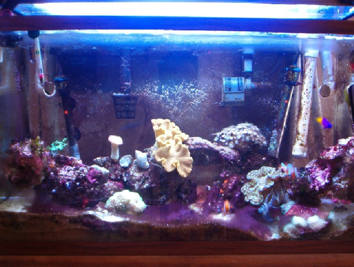 29 gallons reef tank (mostly live coral and fish) - My 29G tank at 1yr 4 months
