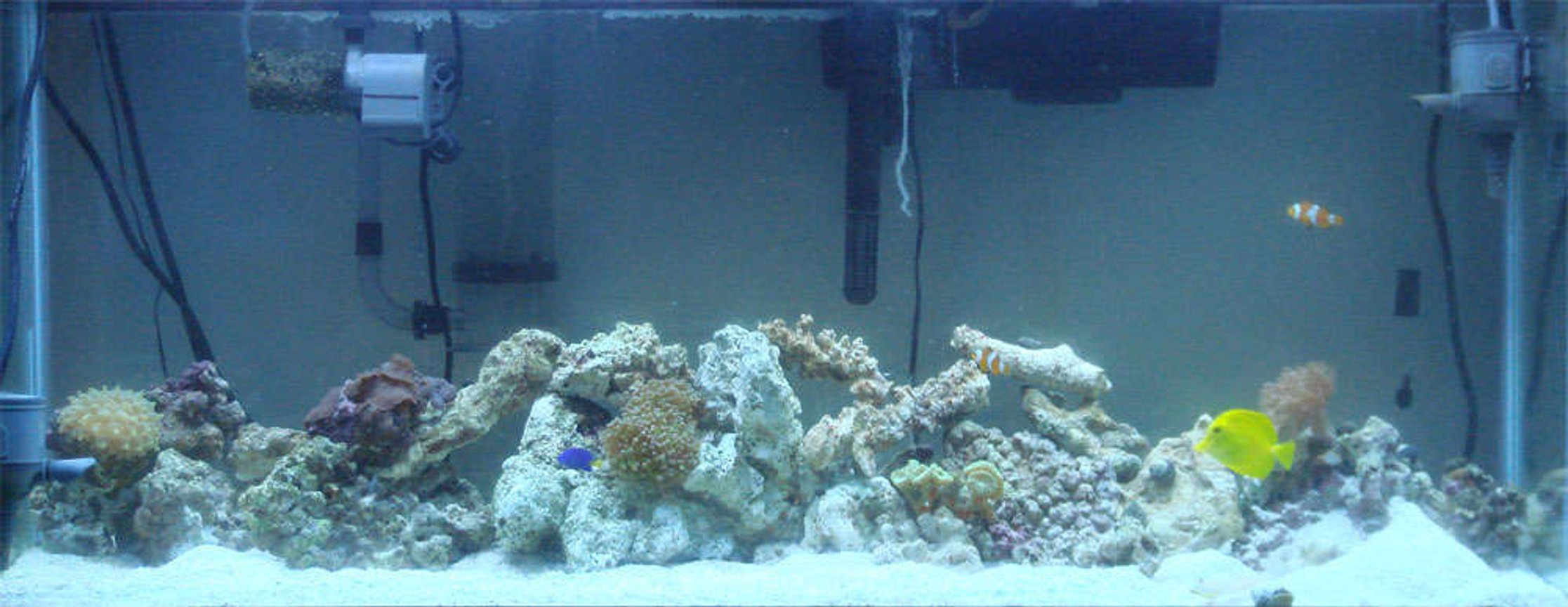55 gallons reef tank (mostly live coral and fish) - My saltwater tank, soon to be reef tank.