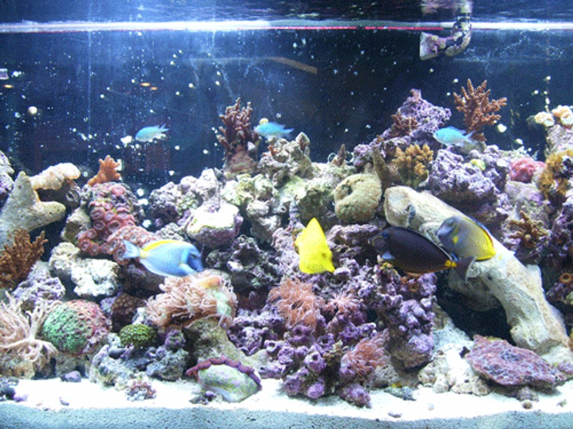 55 gallons reef tank (mostly live coral and fish) - updated pic, after a couple of moves and some redefinition...
