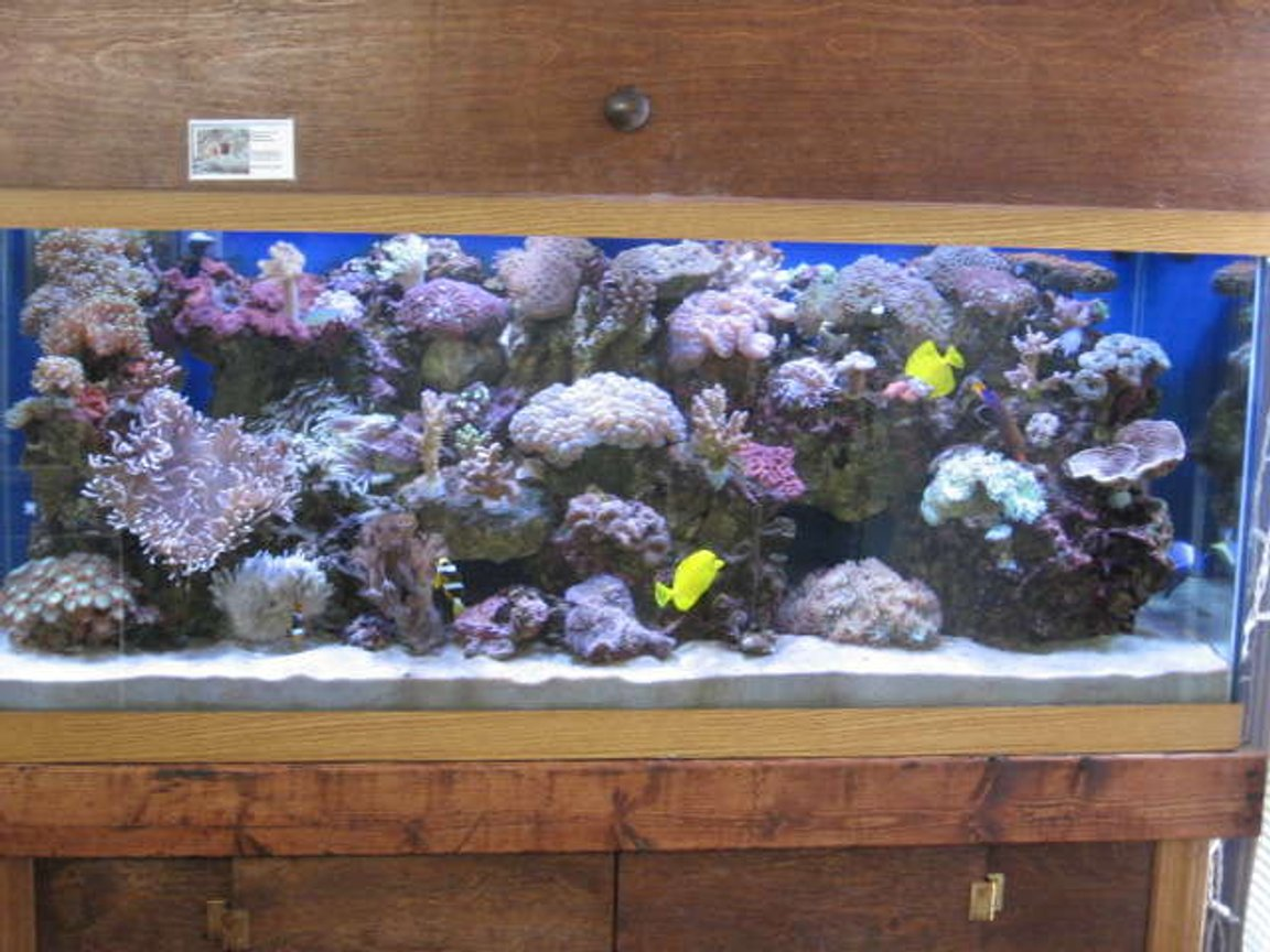 225 gallons reef tank (mostly live coral and fish) - Busy Reef'n