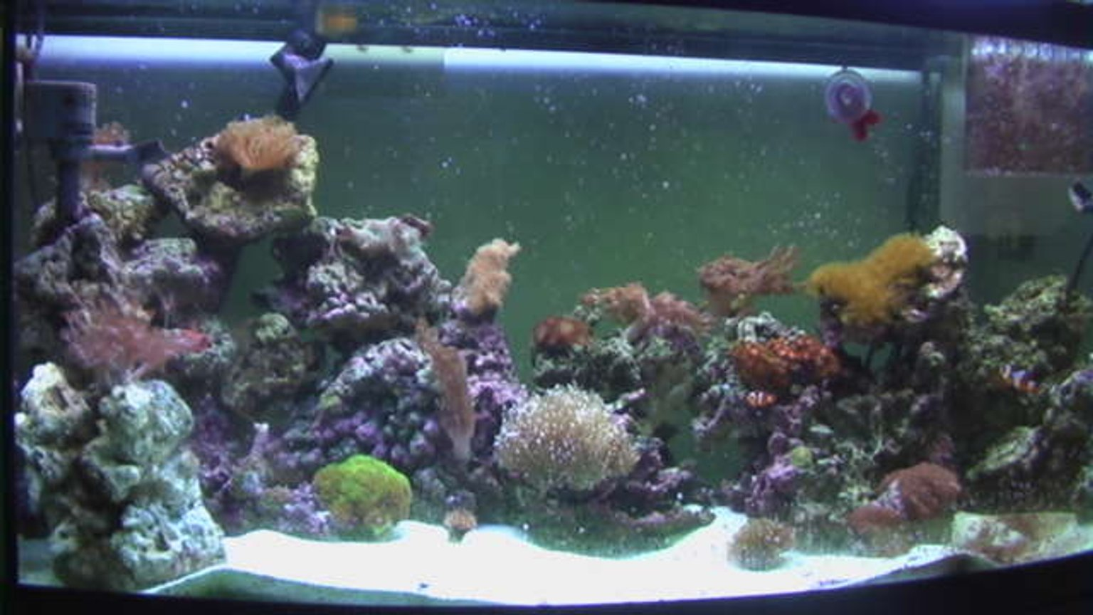 72 gallons reef tank (mostly live coral and fish) - 72 Gallon Bowfront