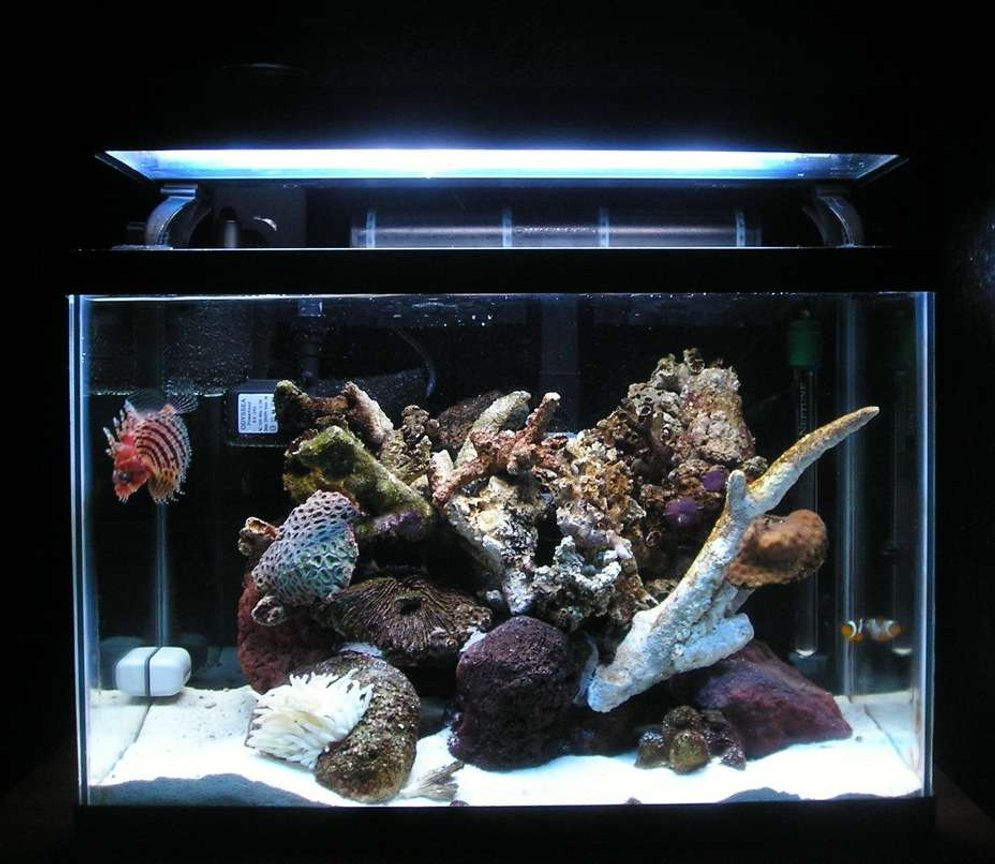 20 gallons reef tank (mostly live coral and fish) - Main View