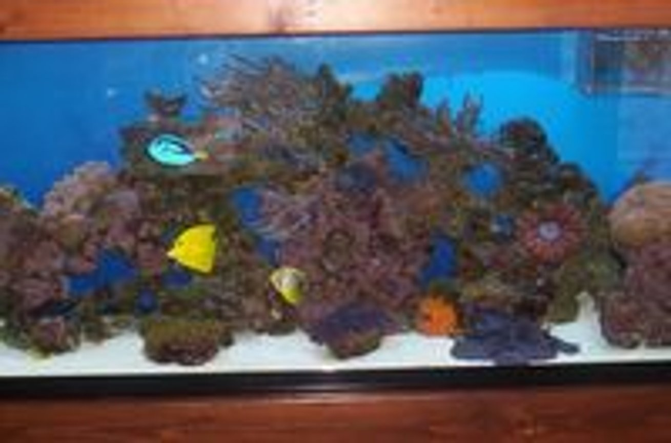 55 gallons reef tank (mostly live coral and fish) - 11/2007