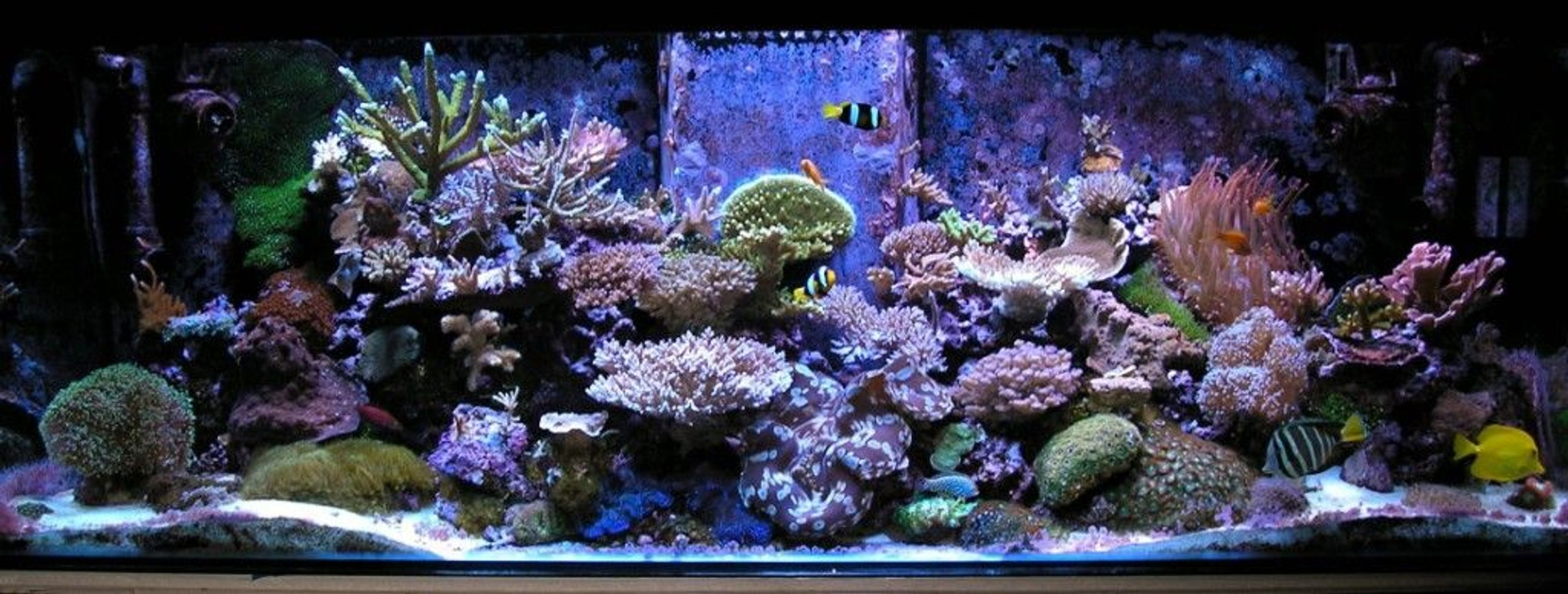 180 gallons reef tank (mostly live coral and fish) - recent pic