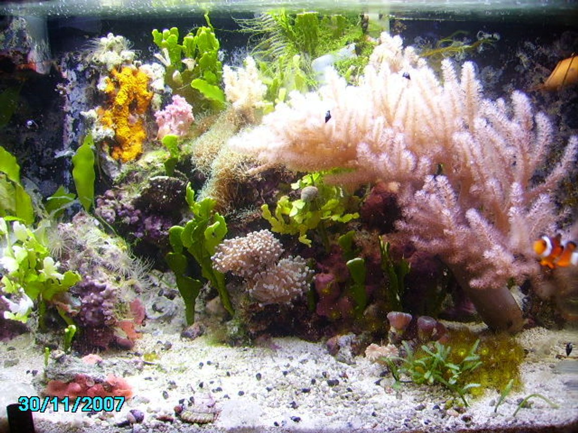 10 gallons reef tank (mostly live coral and fish) - 10 gal. running for 3 years