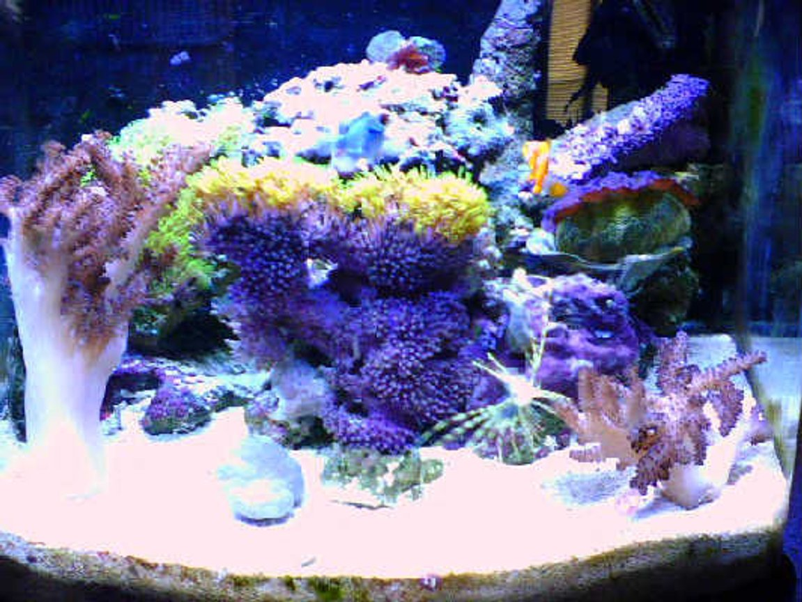 180 gallons reef tank (mostly live coral and fish) - 12 gallon nano saltwater tank. up and running for almost 1 year now.