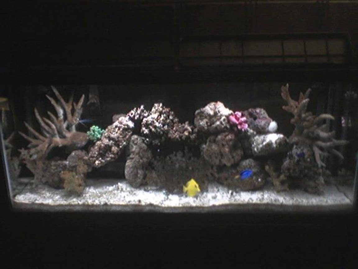 55 gallons reef tank (mostly live coral and fish) - 55 gal tank