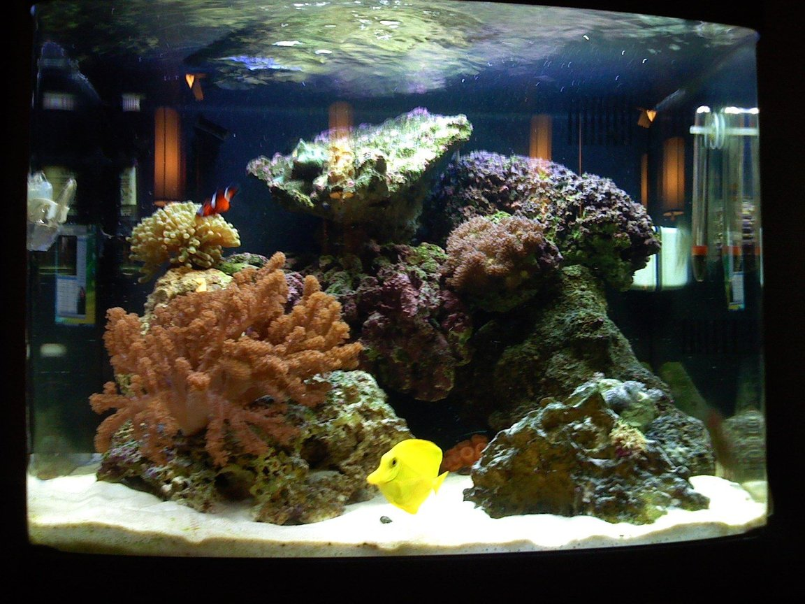 29 gallons reef tank (mostly live coral and fish) - 29 Gallon, First Saltwater tank.