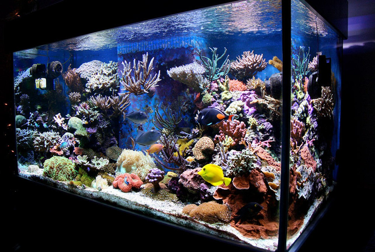 210 gallons reef tank (mostly live coral and fish) - my tank (Jan 08)