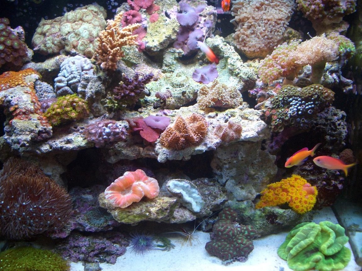 34 gallons reef tank (mostly live coral and fish) - after 5 months