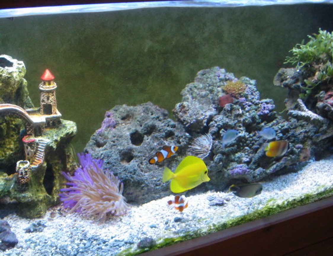 60 gallons reef tank (mostly live coral and fish) - my fish tank two years later