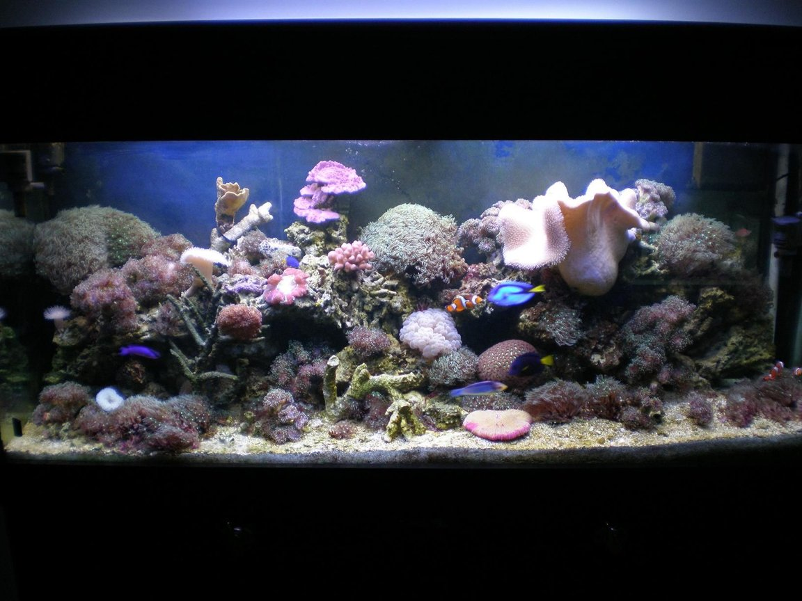 120 gallons reef tank (mostly live coral and fish) - 120 gal reef