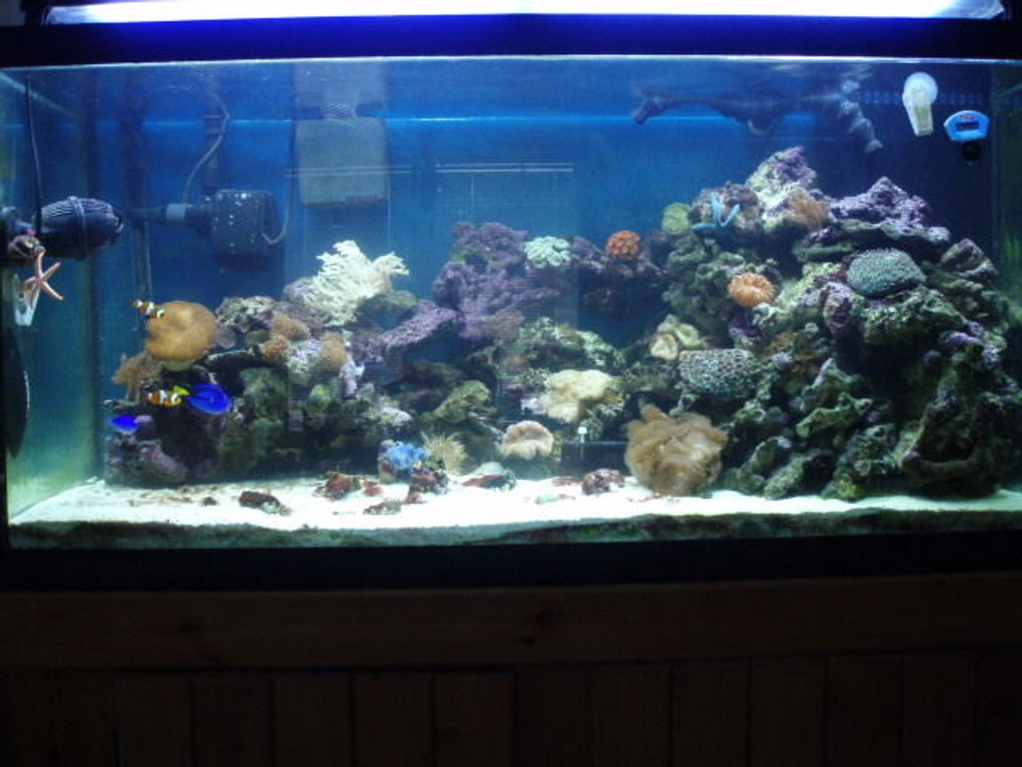 90 gallons reef tank (mostly live coral and fish) - updated pic of tank- lots of new corals and critters