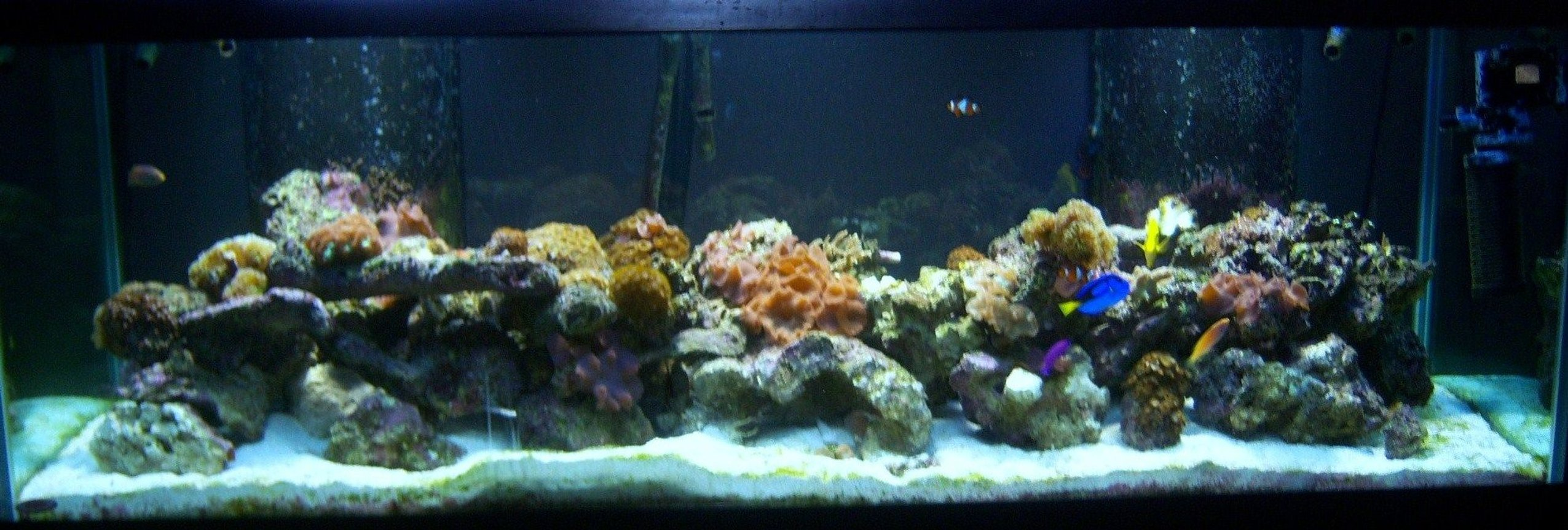 180 gallons reef tank (mostly live coral and fish) - Reef