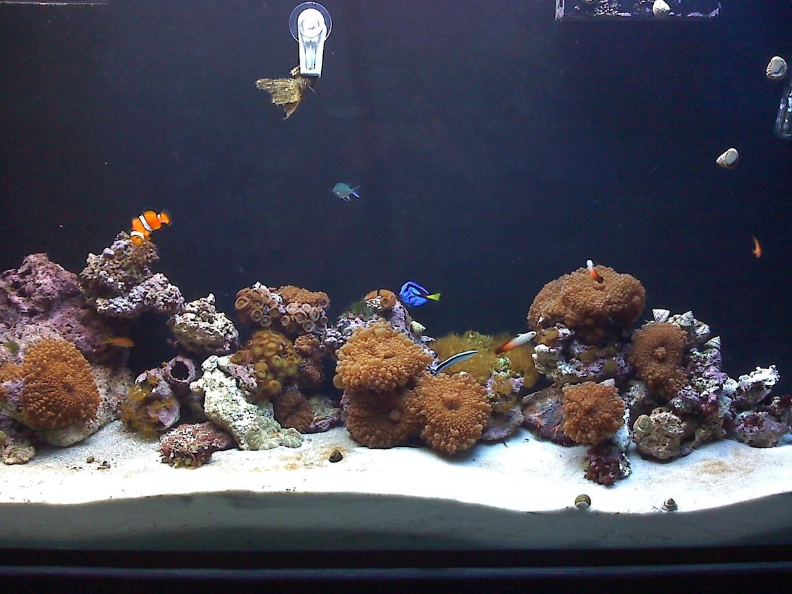 80 gallons reef tank (mostly live coral and fish) - 80 gallon reef