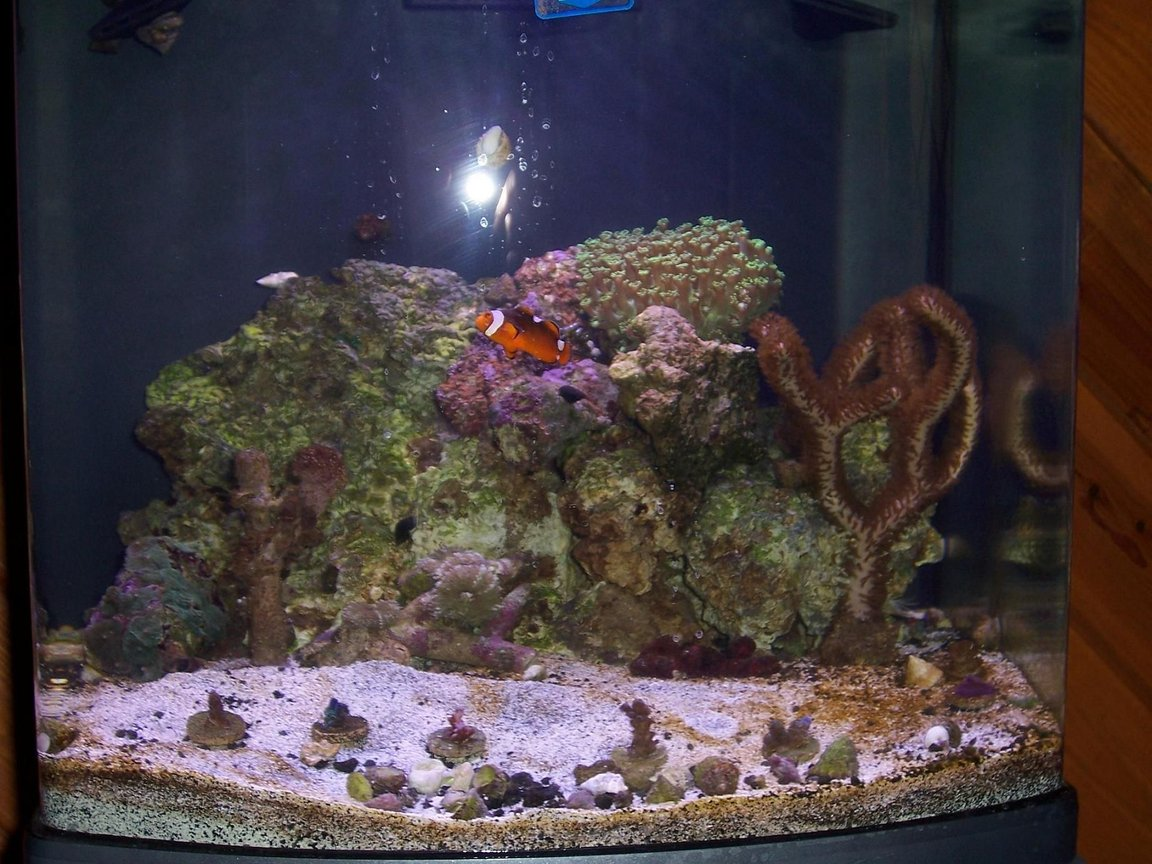 28 gallons reef tank (mostly live coral and fish) - my tank