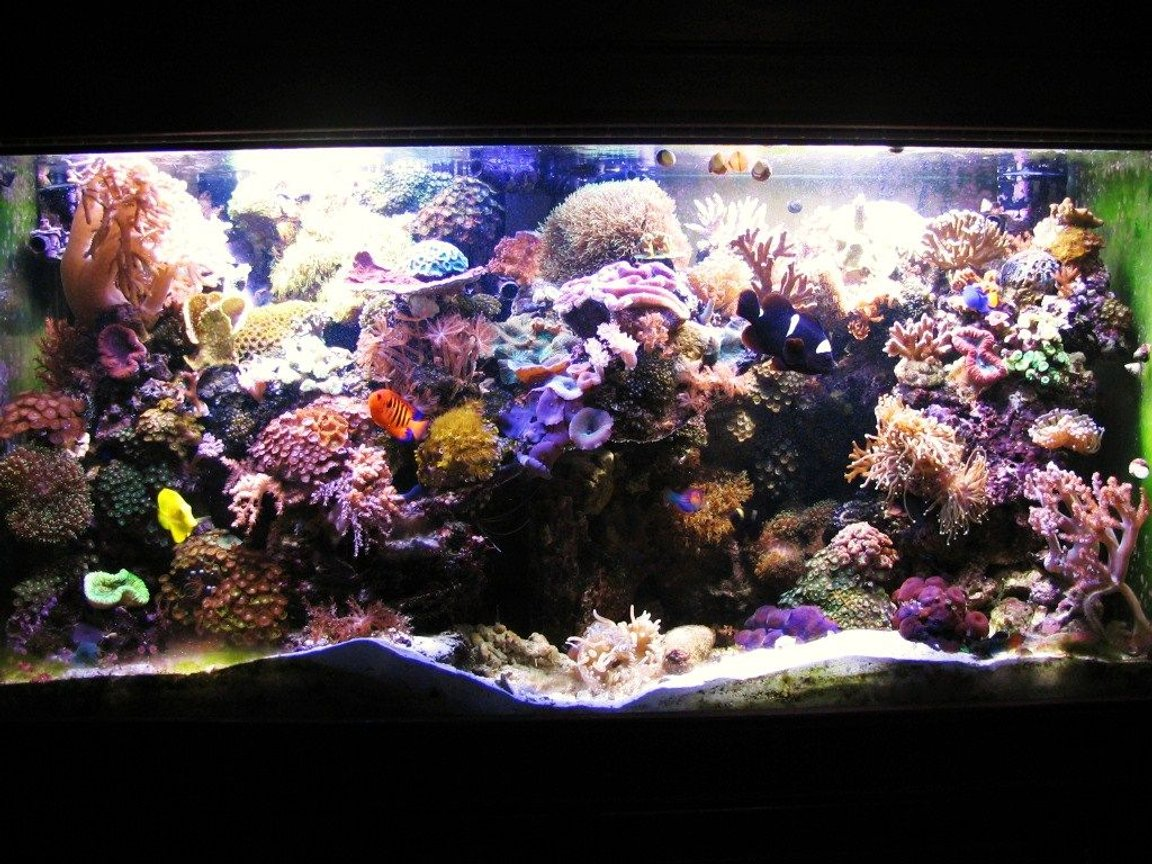 90 gallons reef tank (mostly live coral and fish) - New aquascaping, full tank