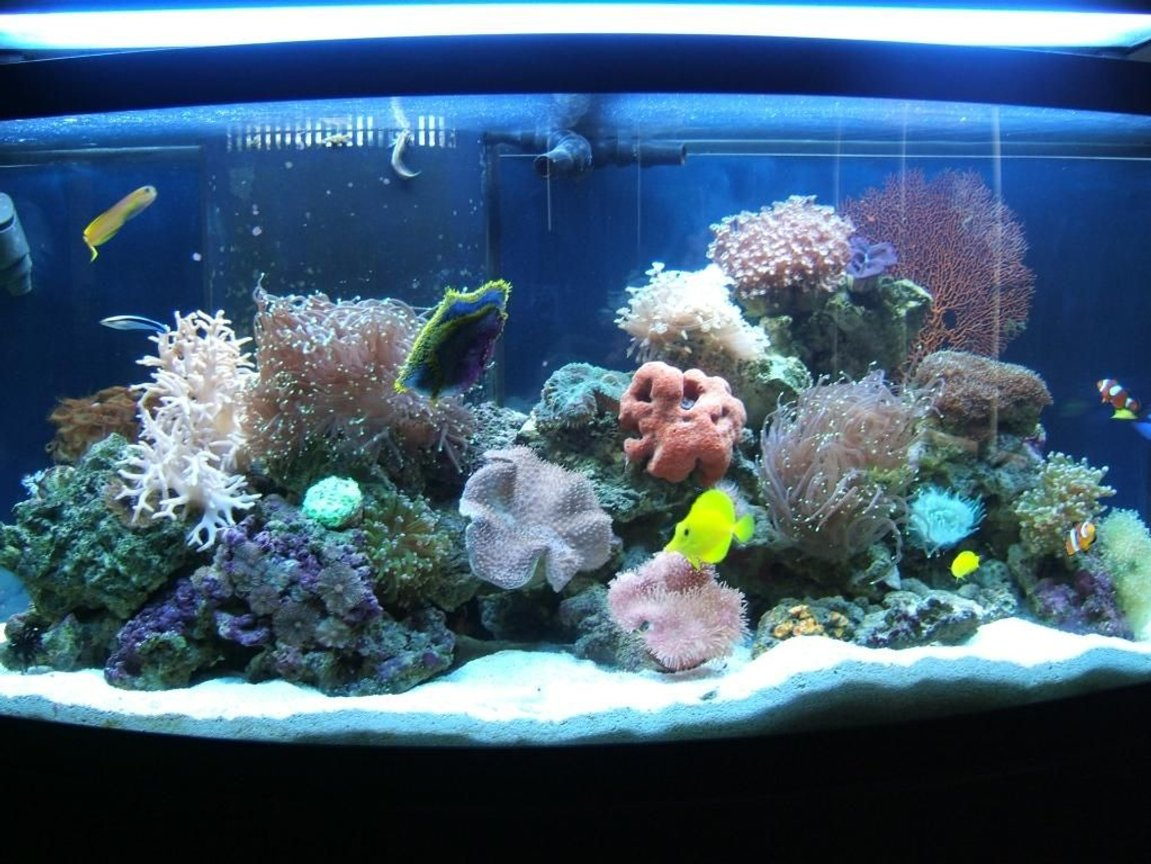 72 gallons reef tank (mostly live coral and fish) - New pic of tank....see previous description