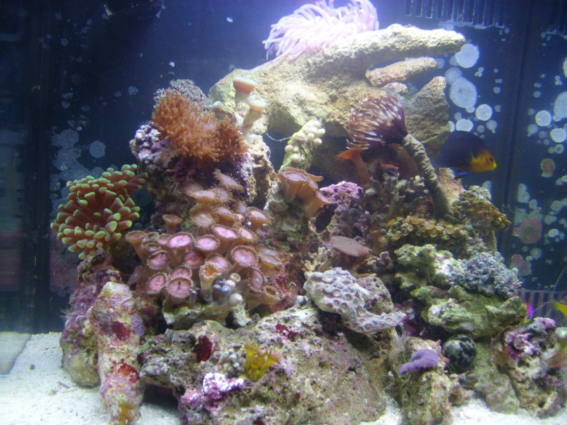 8 gallons reef tank (mostly live coral and fish) - 8gal biocube, new pics