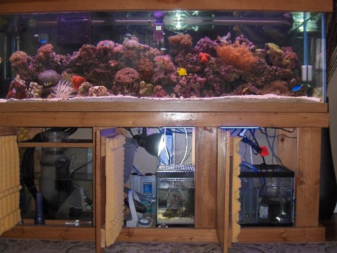 125 gallons reef tank (mostly live coral and fish) - view of tank with doors of sump and refugium open