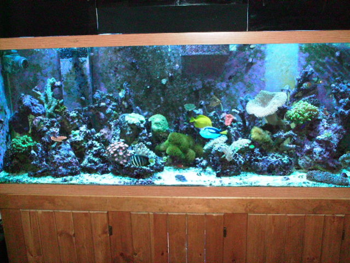 150 gallons reef tank (mostly live coral and fish) - front