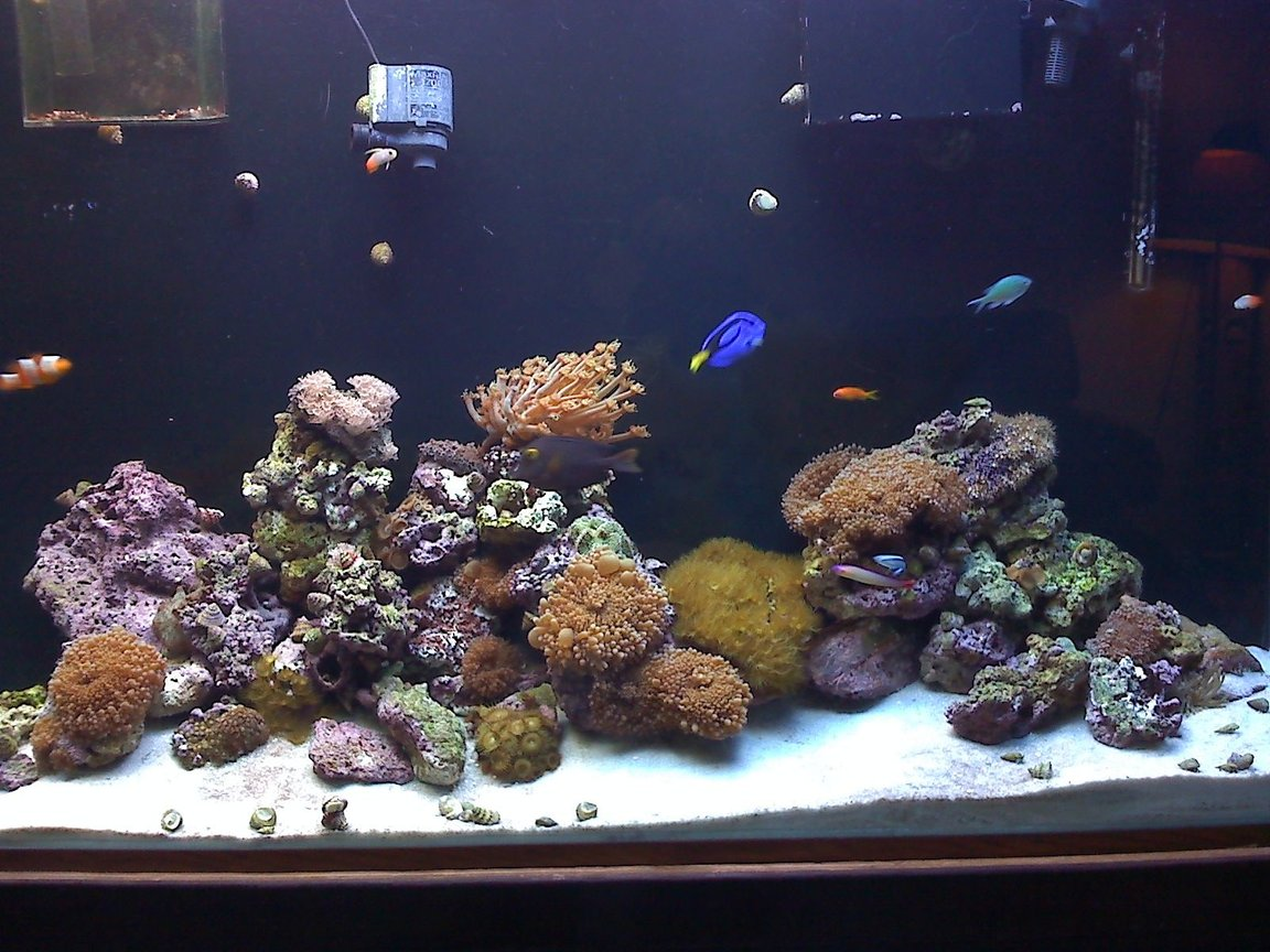 90 gallons reef tank (mostly live coral and fish) - my dad's tank