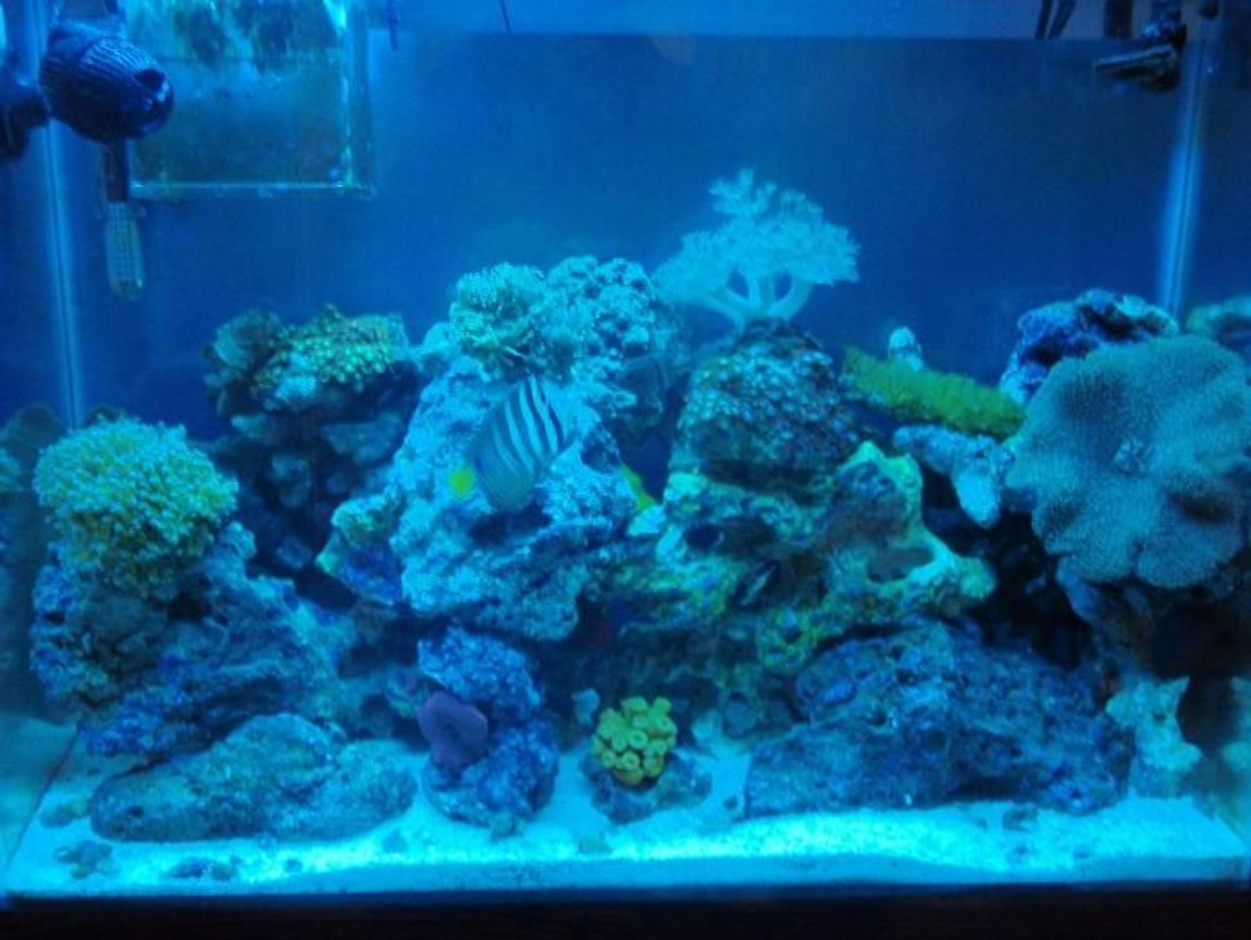 37 gallons reef tank (mostly live coral and fish) - full tank