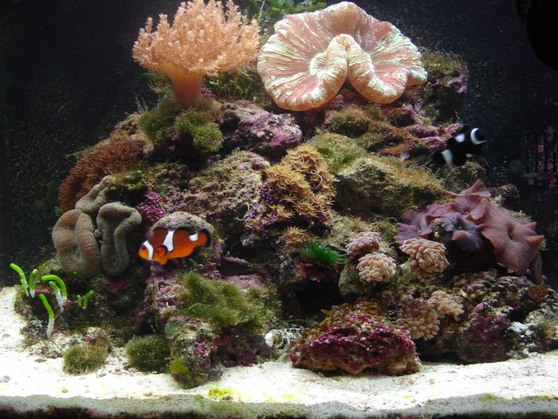 29 gallons reef tank (mostly live coral and fish) - Biocube w/ new arrangement and hammer coral