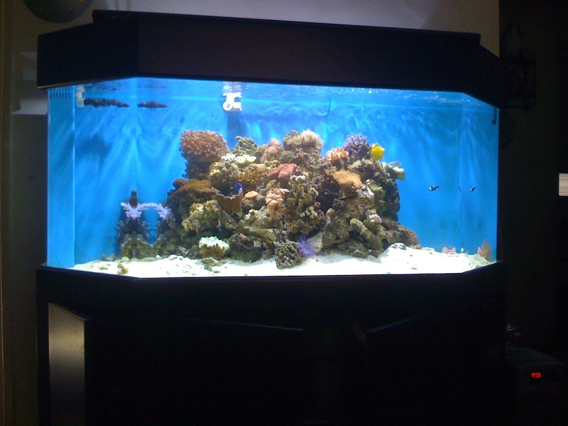 150 gallons reef tank (mostly live coral and fish) - my new 150 hex