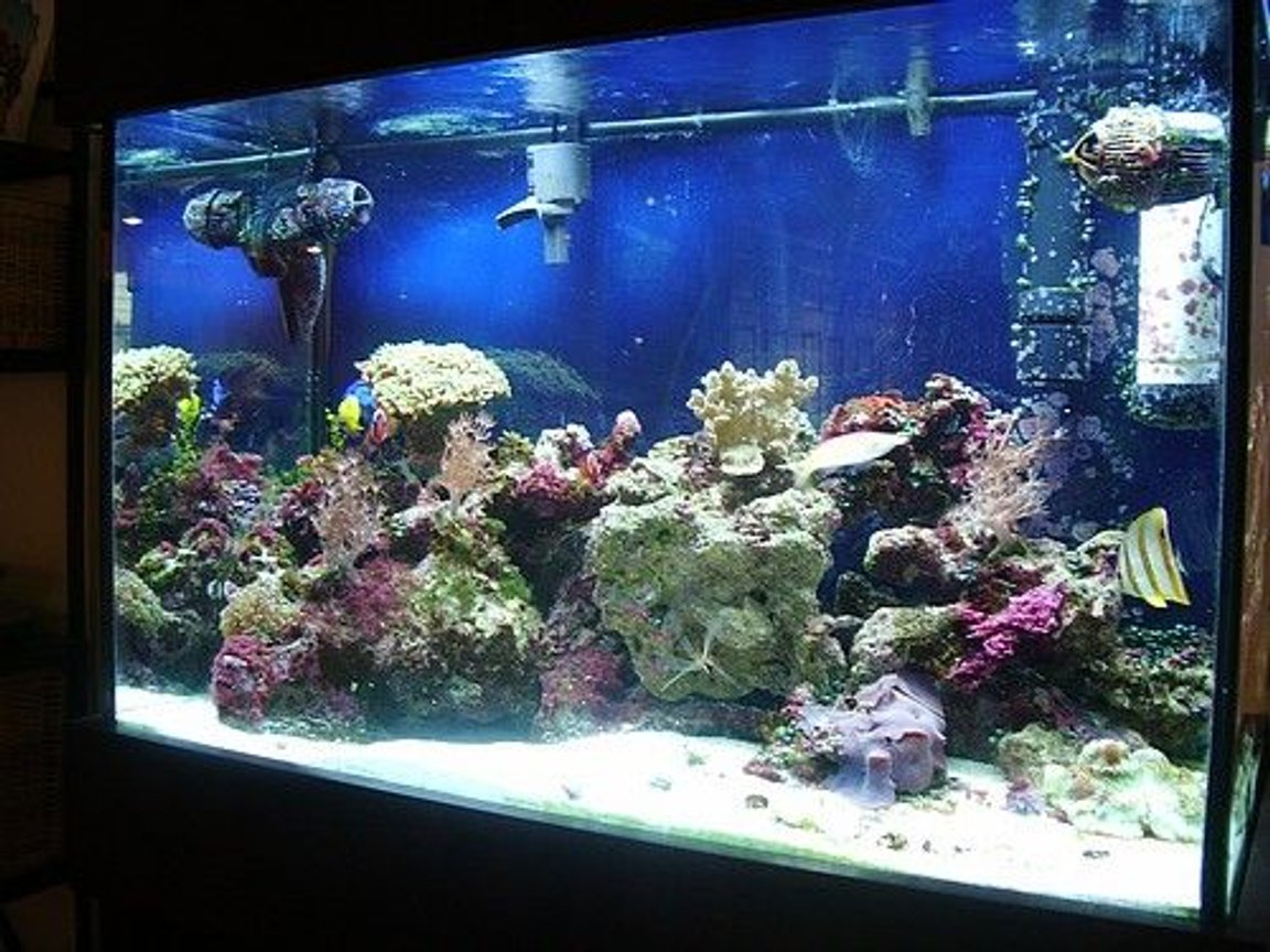 65 gallons reef tank (mostly live coral and fish) - my tank at one years old