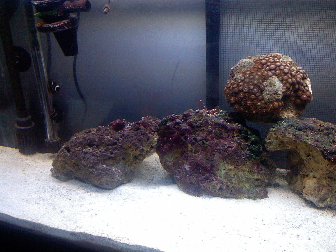30 gallons reef tank (mostly live coral and fish) - another shot of the tank