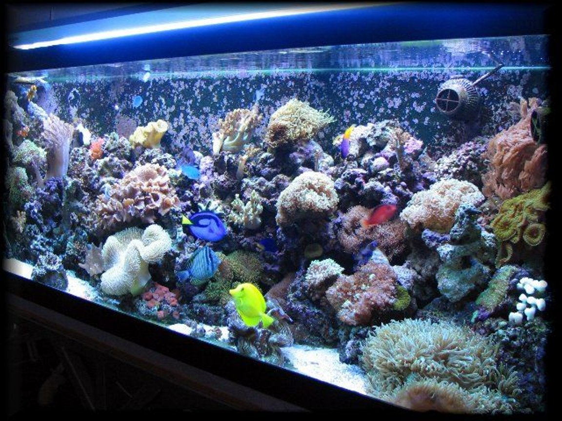 125 gallons reef tank (mostly live coral and fish) - 125 gal reef tank