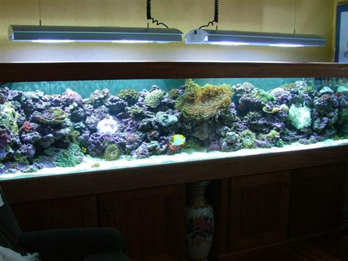 350 gallons reef tank (mostly live coral and fish) - Soft Coral Tank