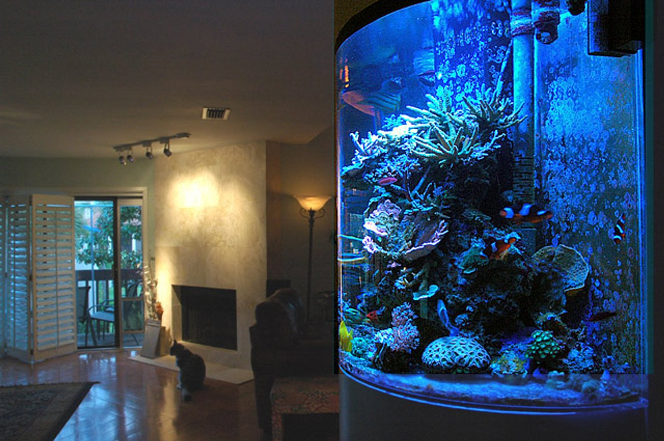 45 gallons reef tank (mostly live coral and fish) - 1/2 Barrel Reef Tank