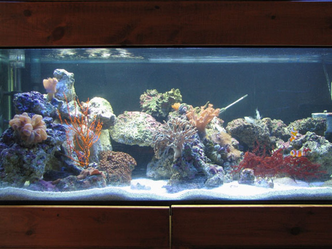 40 gallons reef tank (mostly live coral and fish) - 40 gallon breeder, t5ho lighting, ac500,ac802 powerhead, coralife super skimmmer 65