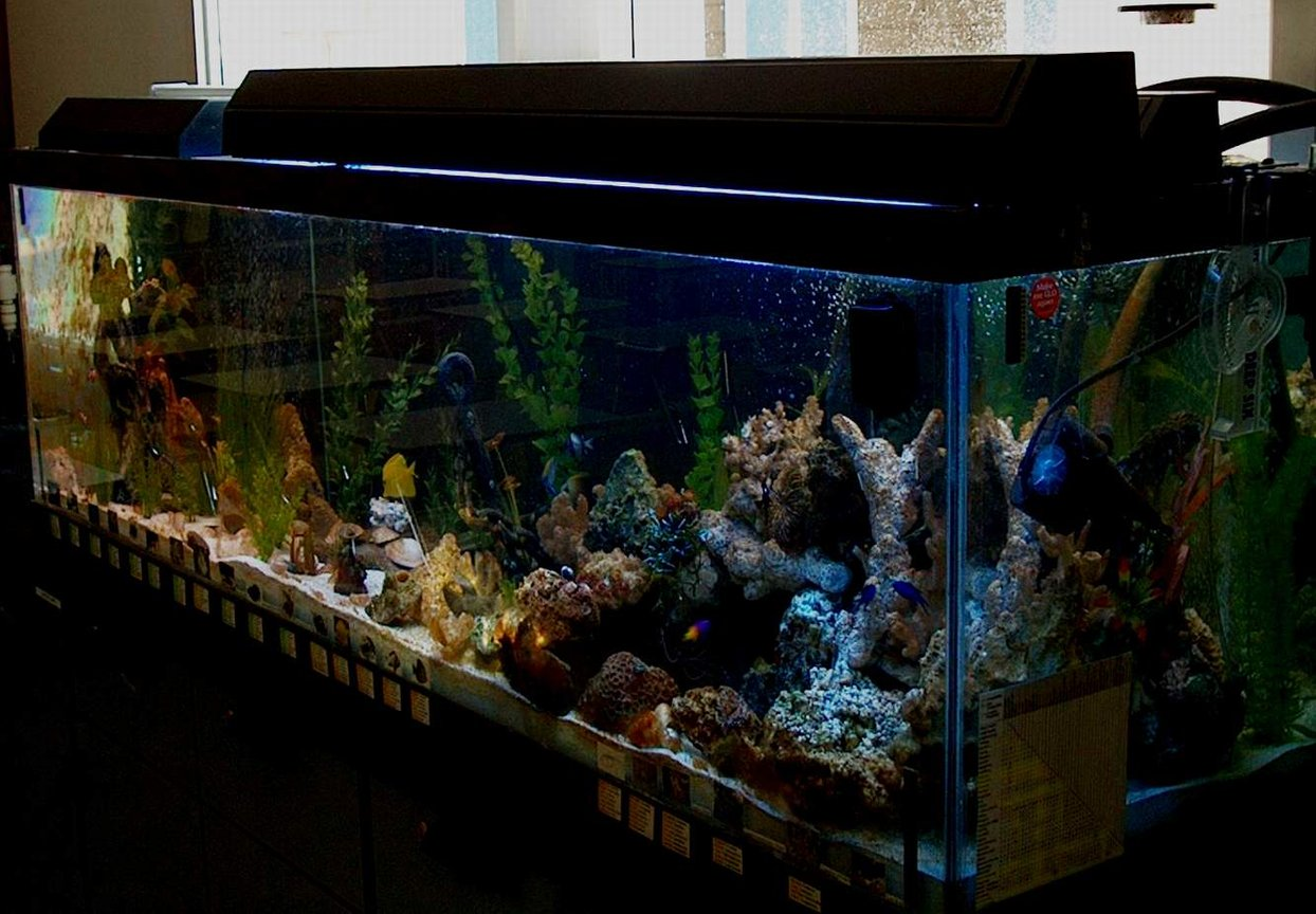 125 gallons reef tank (mostly live coral and fish) - my tank