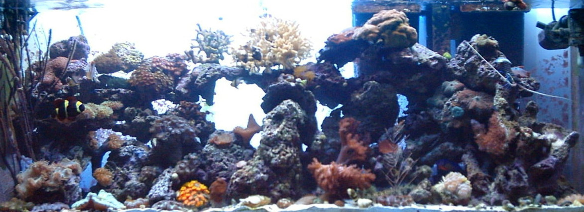 55 gallons reef tank (mostly live coral and fish) - 01/22/06 added tubastrea and elegance coral with an open brain