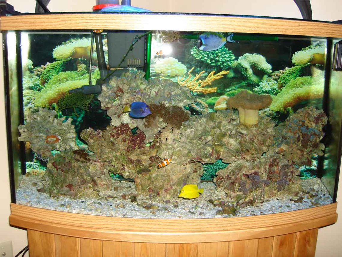 46 gallons reef tank (mostly live coral and fish) - 2