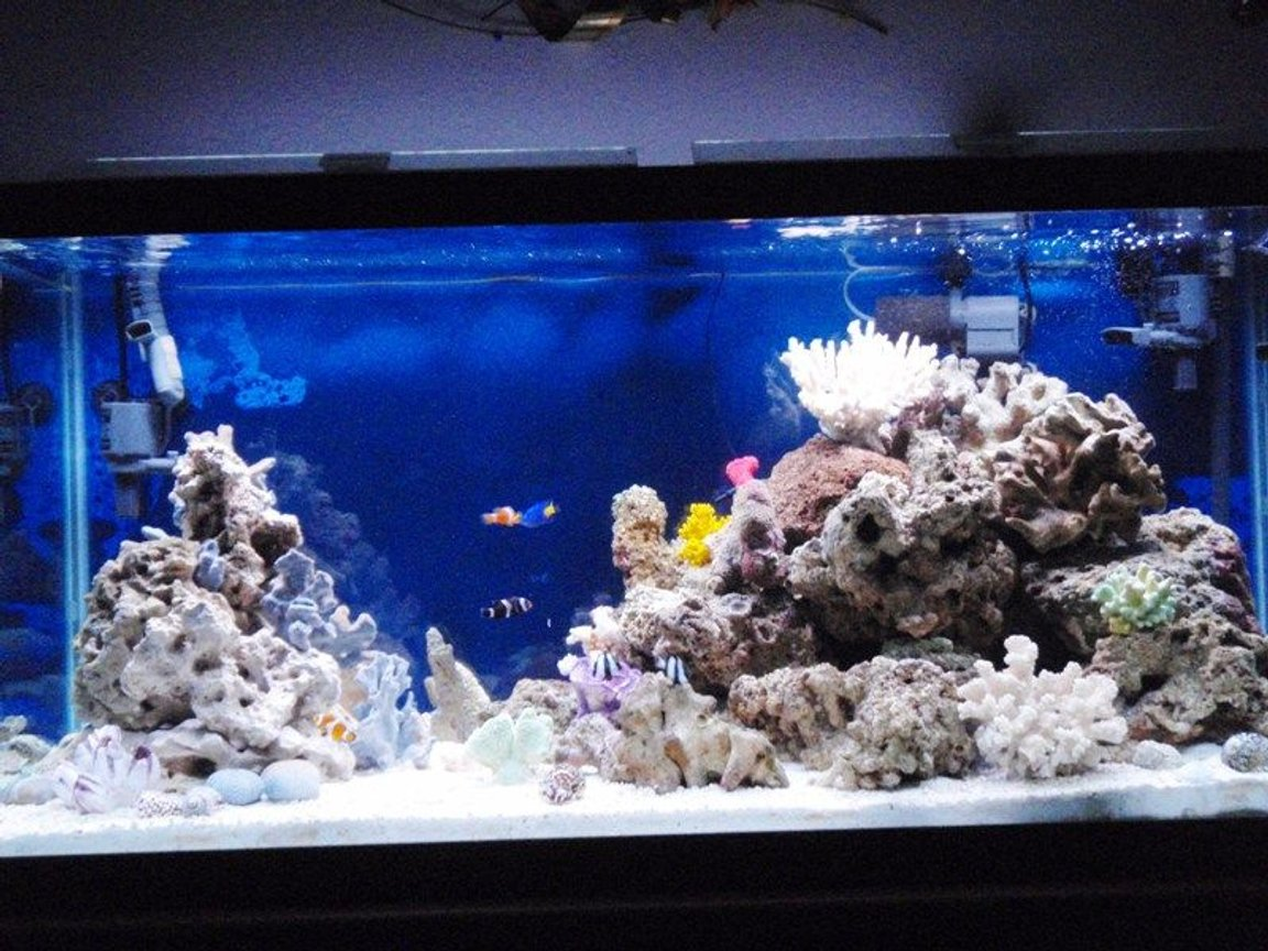 90 gallons reef tank (mostly live coral and fish) - This is my 90G Tank going on almost 2years !!