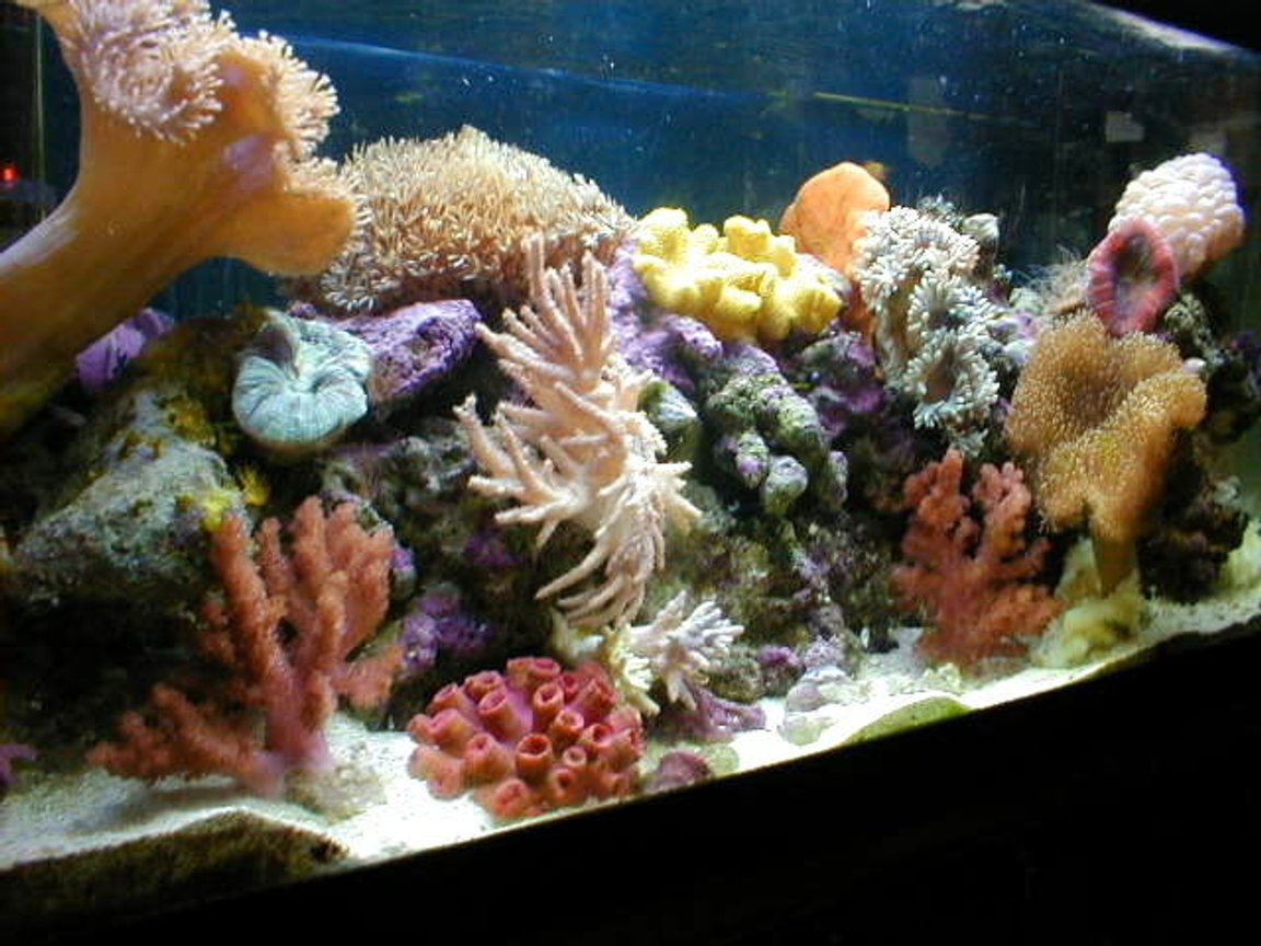 20 gallons reef tank (mostly live coral and fish) - ***7 years old*** Soft Coral Reef Tank