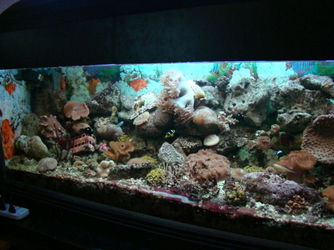 226 gallons reef tank (mostly live coral and fish) - been up and running for one year