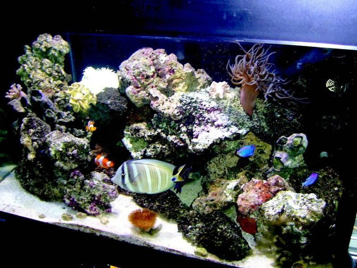 75 gallons reef tank (mostly live coral and fish) - Tank
