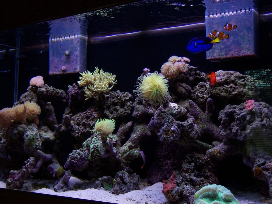 90 gallons reef tank (mostly live coral and fish) - 90 Gallon Coral Reef
