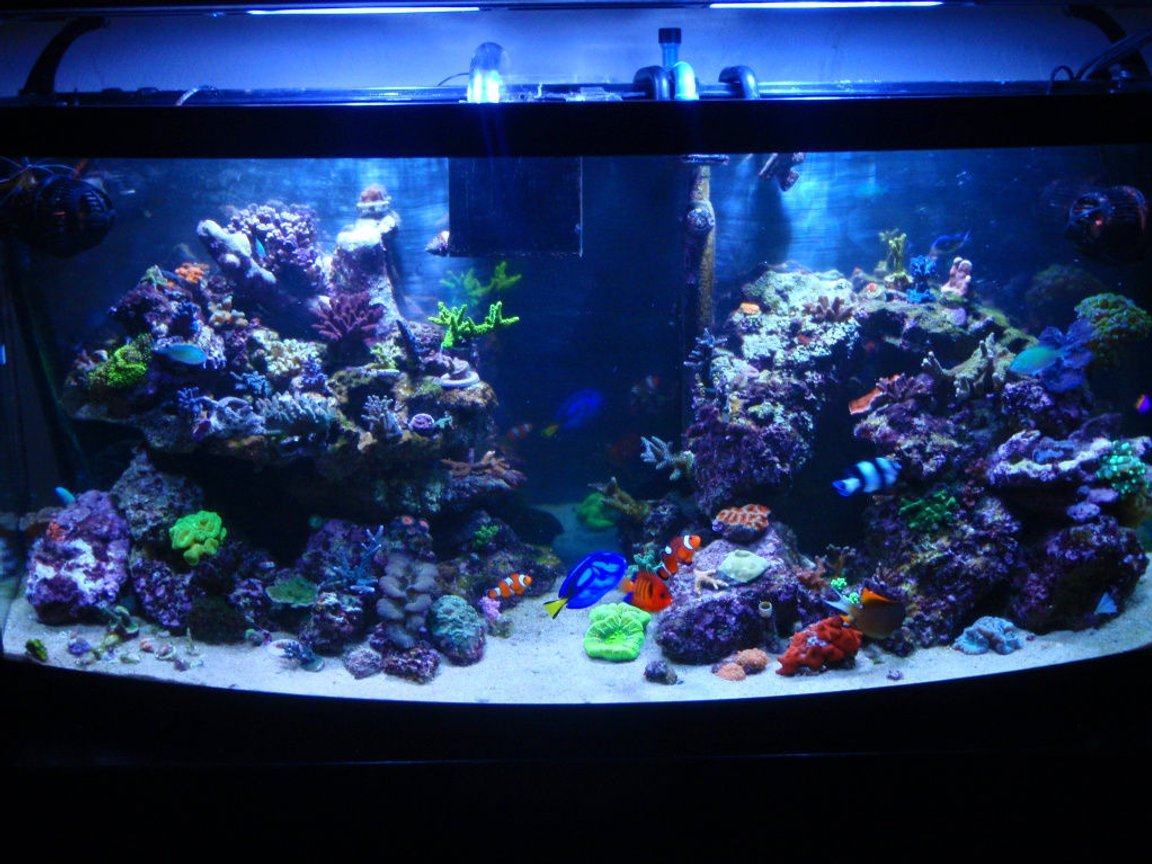 72 gallons reef tank (mostly live coral and fish) - New Pic of my 72 Bowfront. New Aquascape, New Lights, New Ballast, New Corals, New Fish. Enjoy!!!